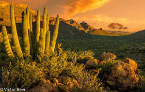 An Evening at Organ Pipe